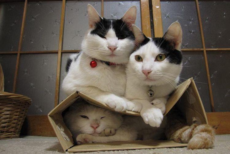 Кошка в коробке прячется от котов