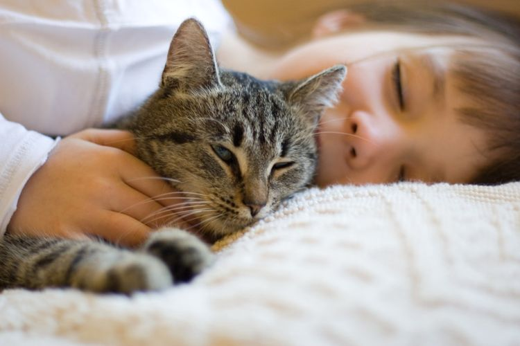 Ребенок обнимает кошку
