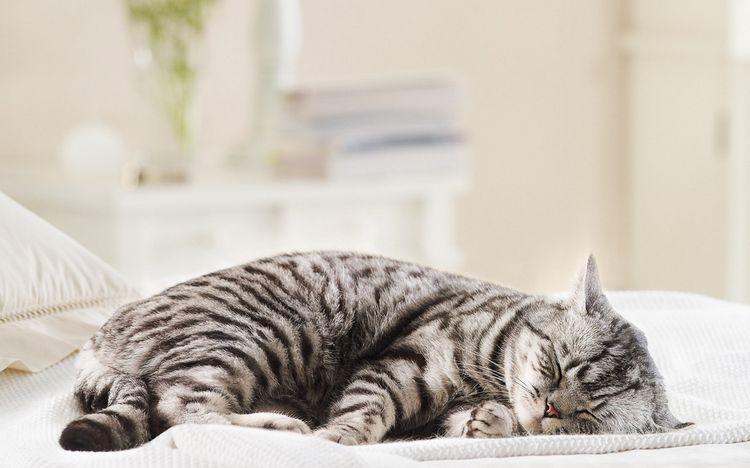 Плохо коту после кастрации