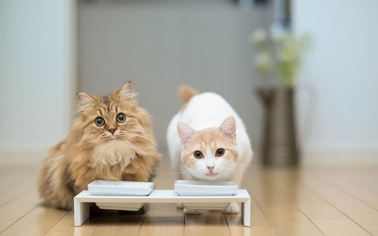 Как кормить кастрата кота