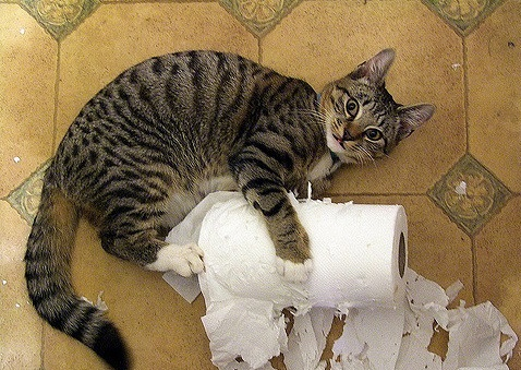 Кот сам не писает и не какает