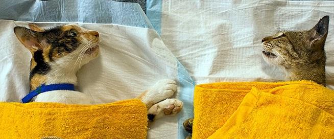 Кот мелкая дрожь