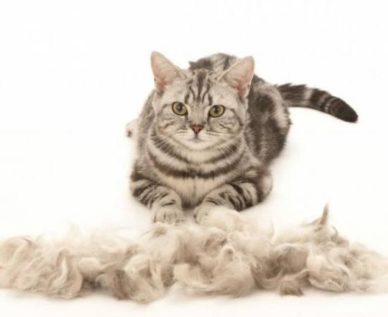Кошка и куча шерсти