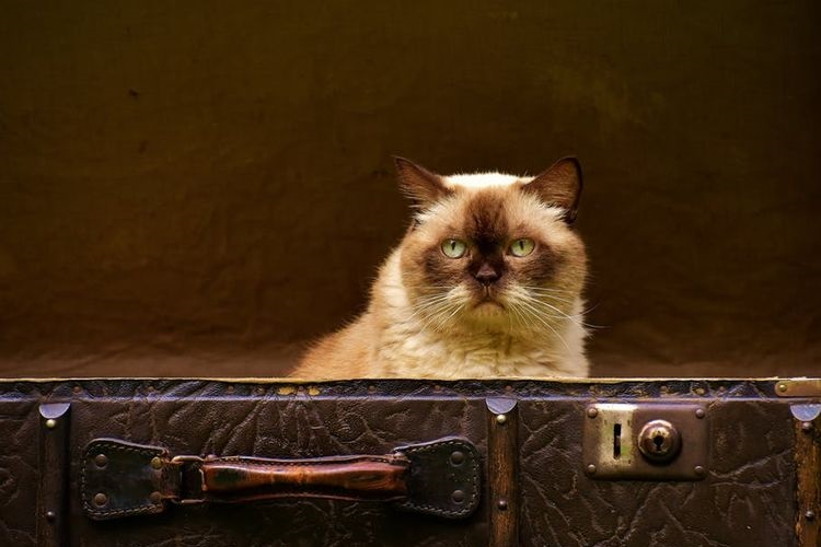 Кот в чемодане