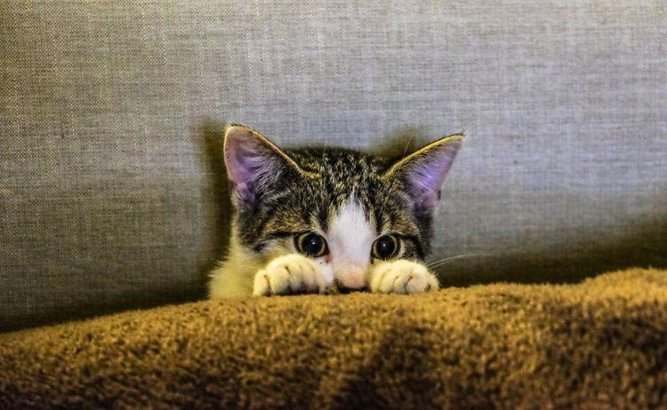 Котенок прячется за диваном