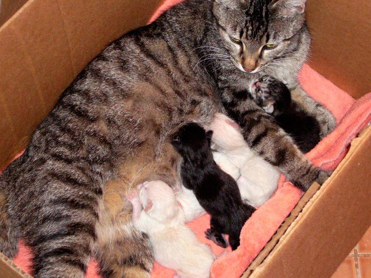 Кошка с котятами в коробке