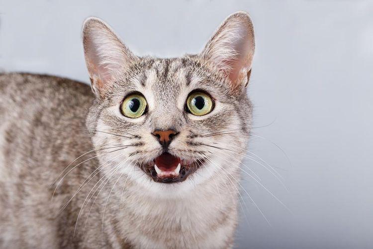 Как выяснить что ваша кошка беременна признаки и поведение