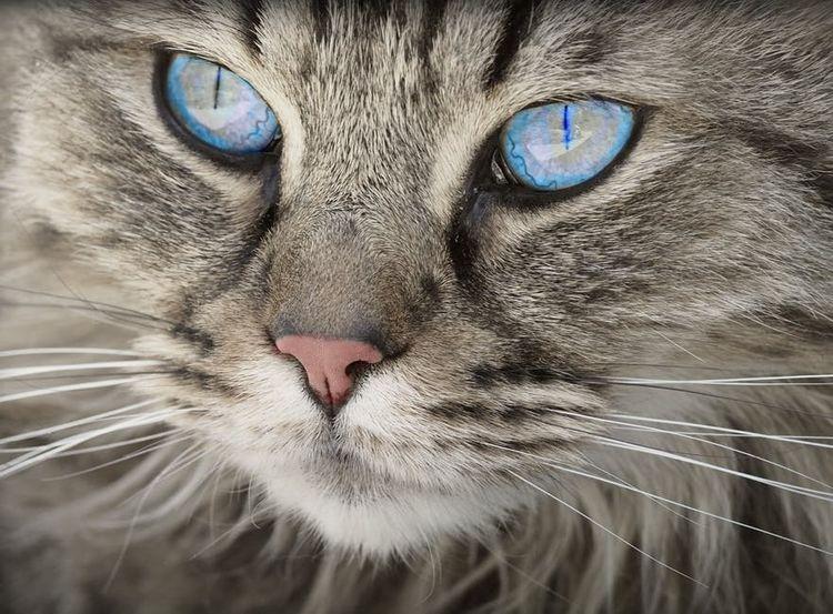 У кошки кал с кровью: что это значит, почему появился, что 5