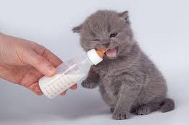 Докорм трехнедельного котенка