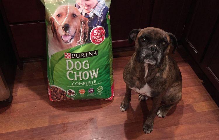 Собака у пакета с кормом