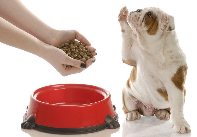 Собака просит сухой корм
