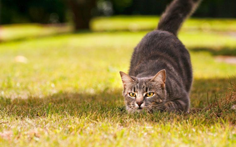 Кошка готовится прыгнуть