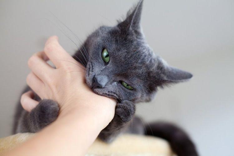 Кошка кусает за руку