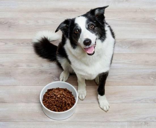 Домашняя собака у миски с кормом