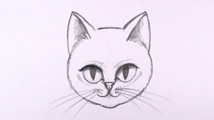 Нарисованная карандашом морда кошки
