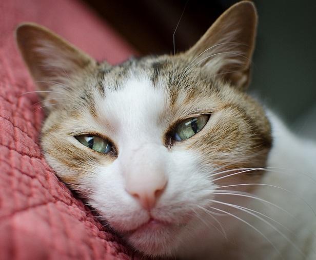 чем вывести токсины у кота хпн