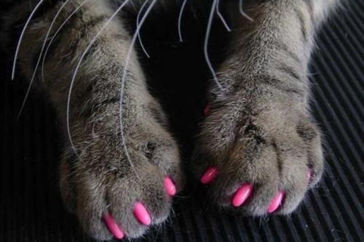 Розовые аптицарапки на кошачьих лапах