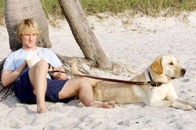 Мужчина и лабрадор на пляже