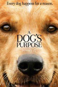 Собачья жизнь кино
