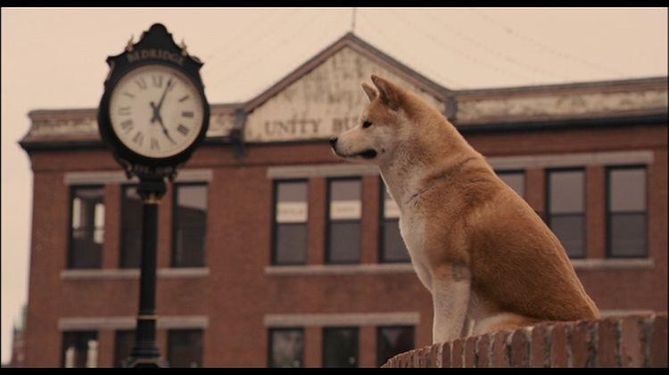 Собака возле часов