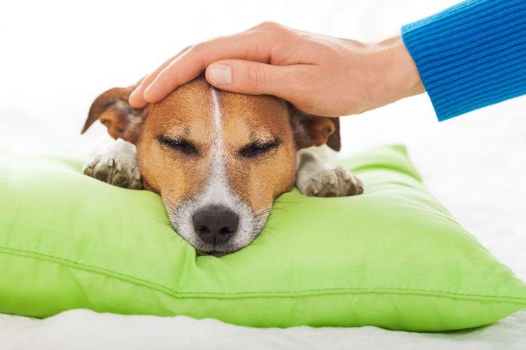 Хозяин гладит собаку