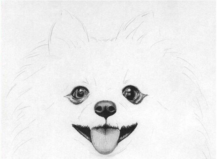 Прорисовка морды собаки
