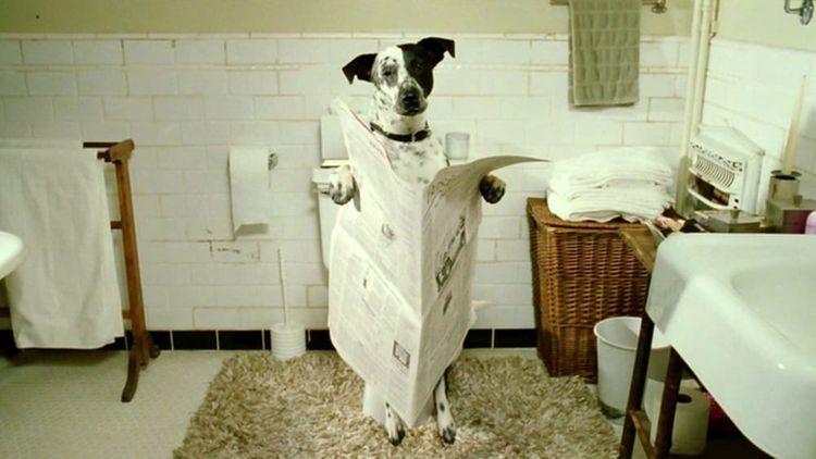 Собака читает газету в туалете