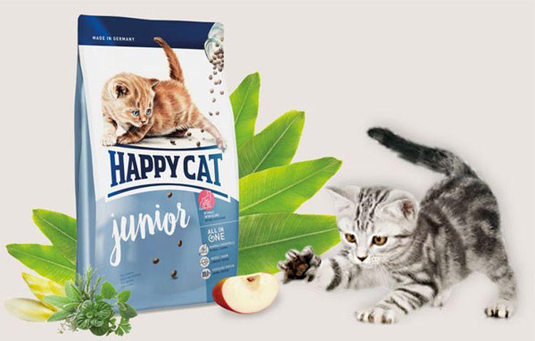 Котенок и сухой корм