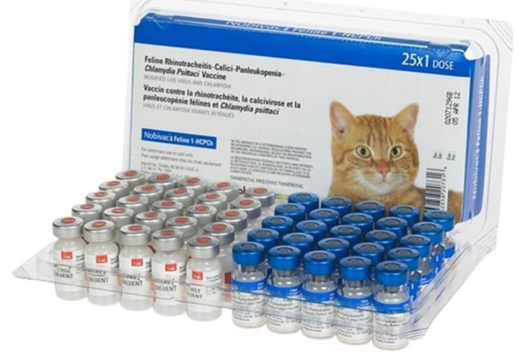Ампулы с вакциной для кошек
