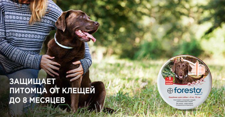 Хозяйка с собакой на природе
