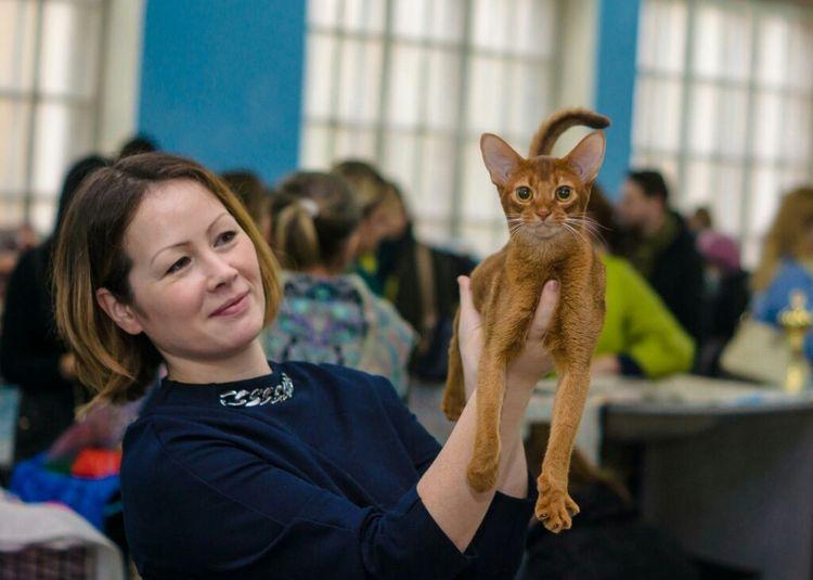 Кошка из питомника ORANGE MARMELAD
