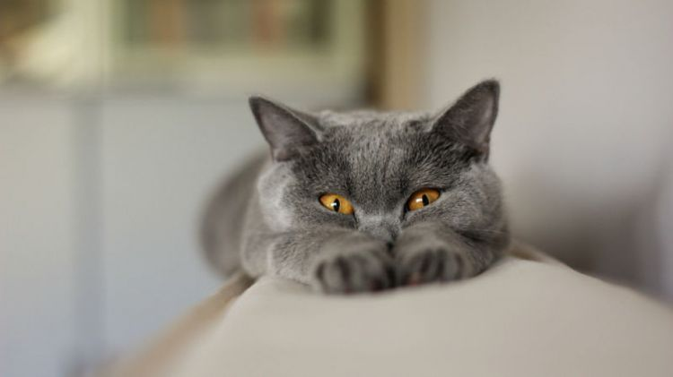 Кот отдыхает