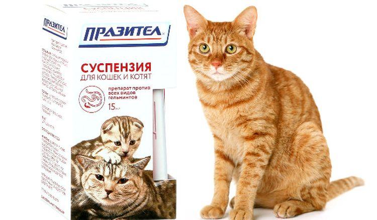 Рыжий кот и препарат Празител