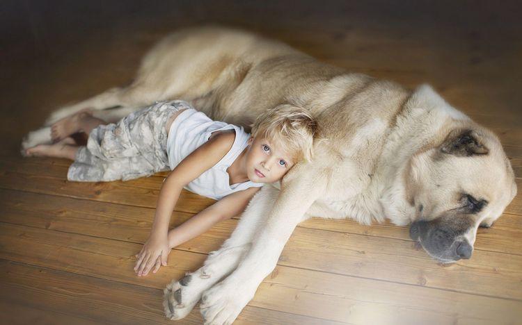 Ребенок лежит возле огромной собаки