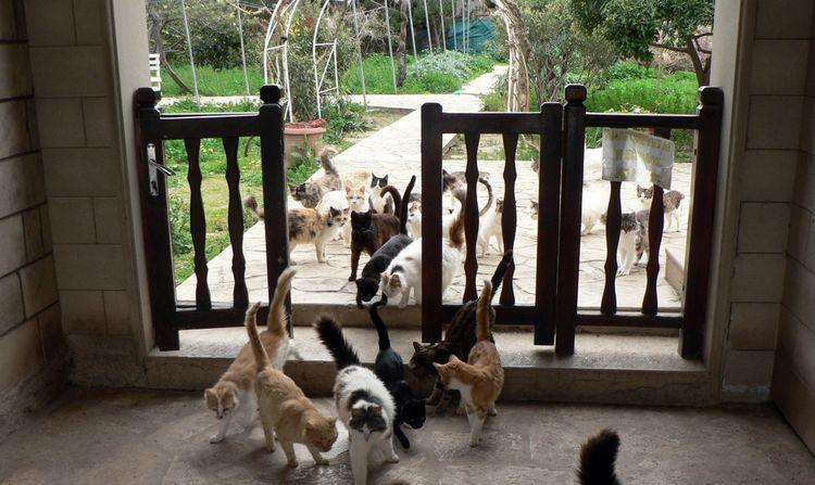 Уличные коты в парке