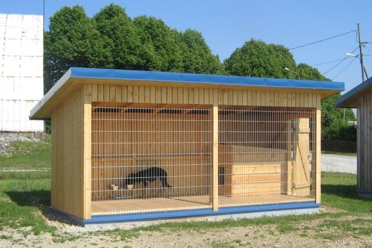 Собака в вольере с синей крышей