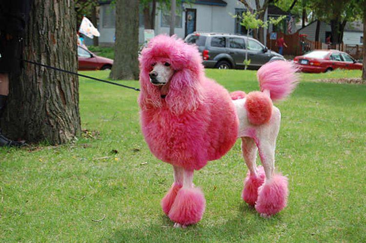 Смешные стрижки собак