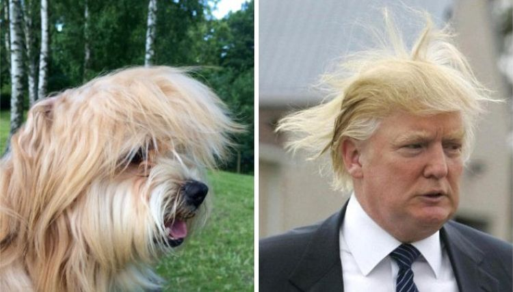 Схожесть собаки и знаменитости