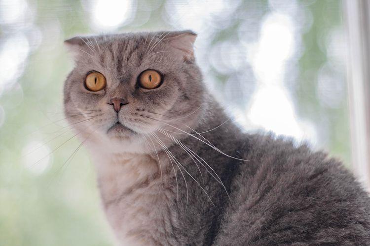 Серый кот на подоконнике