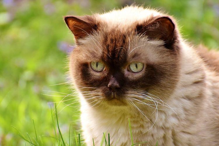 Пушистый кот в траве