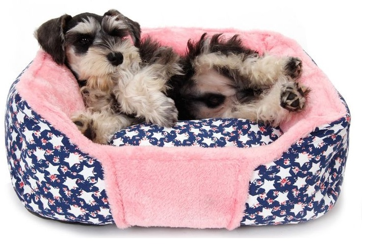 Собака в лежанке