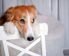 Недержание мочи у собак: причины и лечение