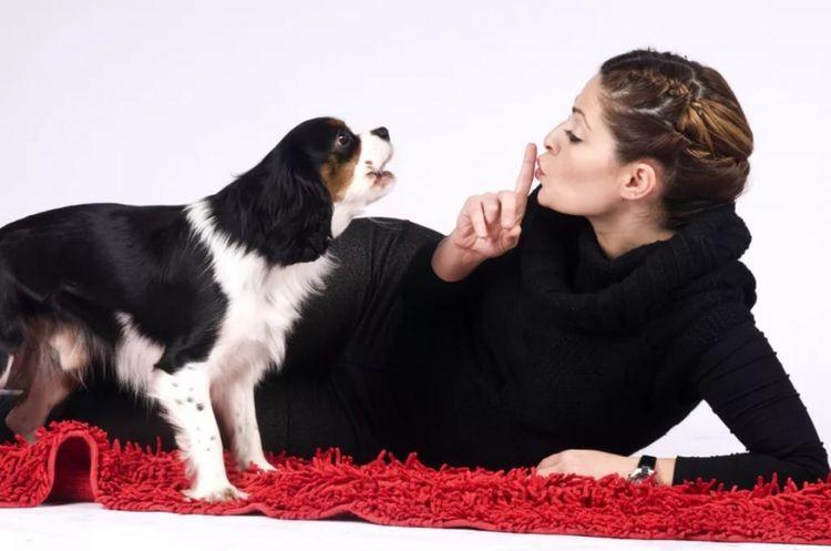 Воющая собака и хозяйка