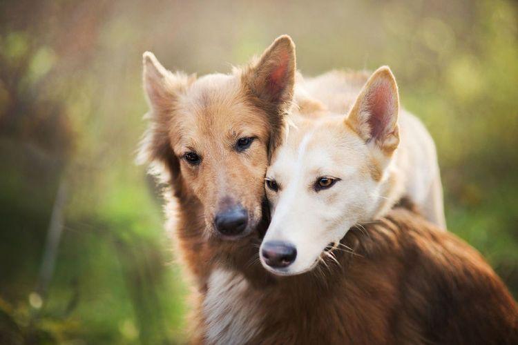 Почему собака воет: 10 причин, народные приметы о вое собак