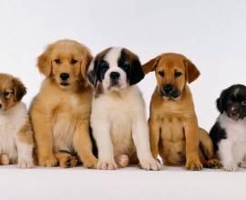 Самые красивые собаки