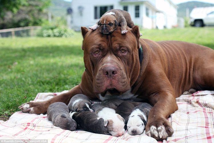 Собака и щенки