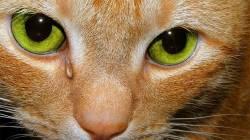У кота после драки гноится глаз что делать