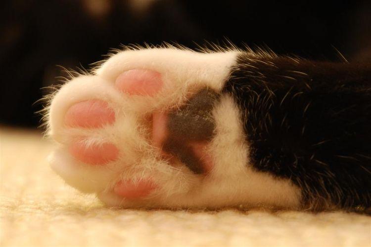 Выявлен вросший ноготь у кошки как помочь любимому пушистому другу
