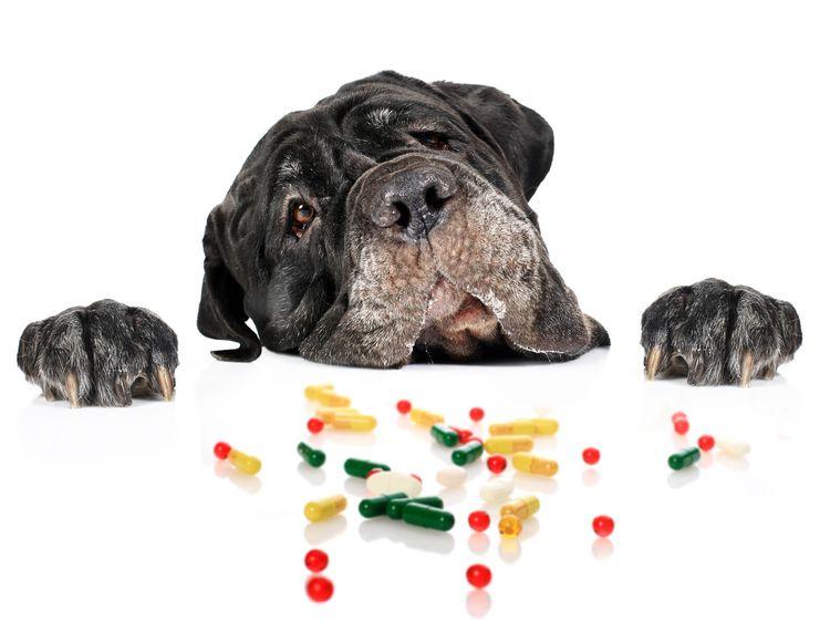 Собака и витамины