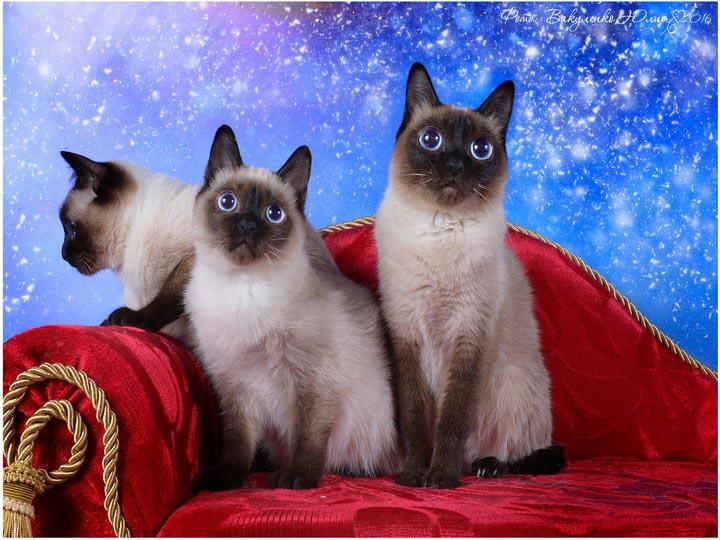 порода самых маленьких кошек